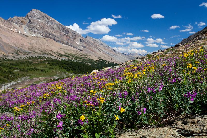 Cataract Wildflowers
